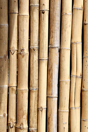 A bamboo wall found in south america Stock Photo - 3851505