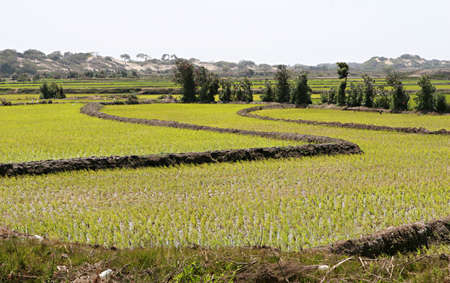 Rice grows in paddys across this fertile landscape