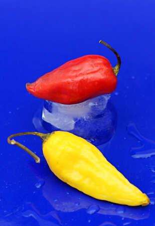 Twee pittige chili peppers op een koude blauwe achtergrond
