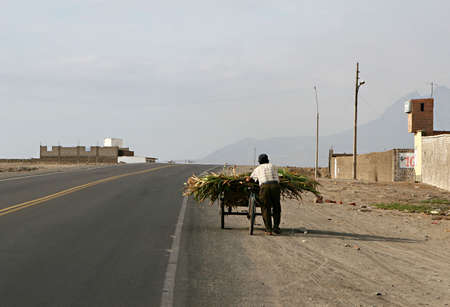 cart road: A man pushes a cart full of corn stalks down a lonely road in Peru