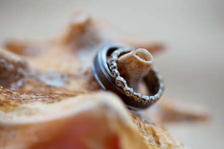 A close-up shot of a beautiful wedding rings on a conch shell