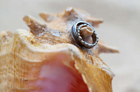 A close-up shot of a beautiful wedding ring on a conch shell