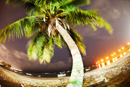 A long exposure of a palm tree at night on the beach in Barbados