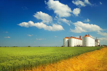 agricultura: Silos agrícolas bajo el cielo azul, en los campos