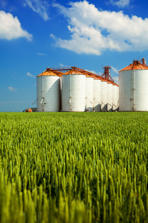agriculture industrial: Agricultural silos under blue sky, in the fields