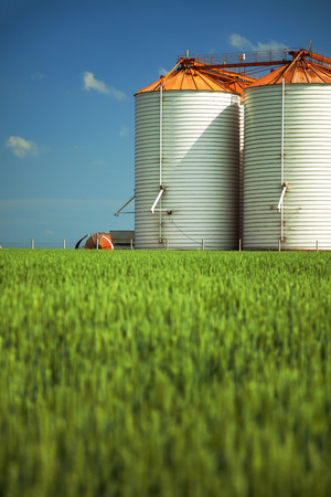 biofuel: Agricultural silos under blue sky, in the fields