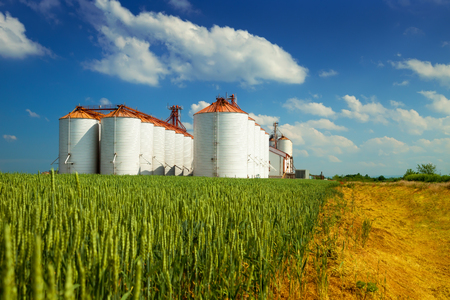 field crop: Agricultural silos under blue sky, in the fields