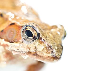 vile: Portrait of frog Stock Photo