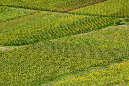 mosel: Wineyards at the Mosel Stock Photo