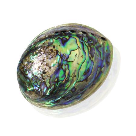 beautiful rare: Beautiful rare item Shell Stock Photo