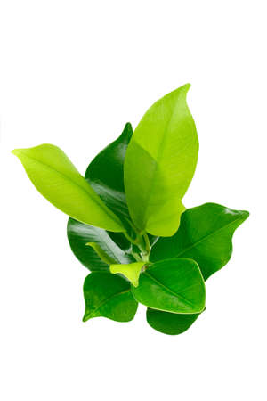 elevated view: Elevated view of green young plant on white background