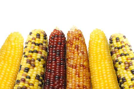 planta de maiz: Cerca de callos indios secas sobre fondo blanco