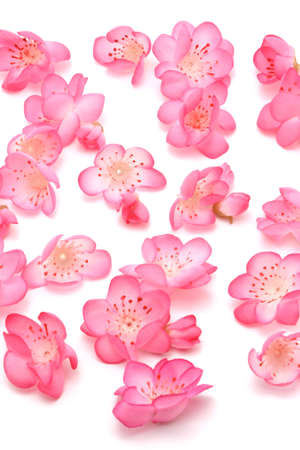 Plum blossoms on white background for Chinese New Year