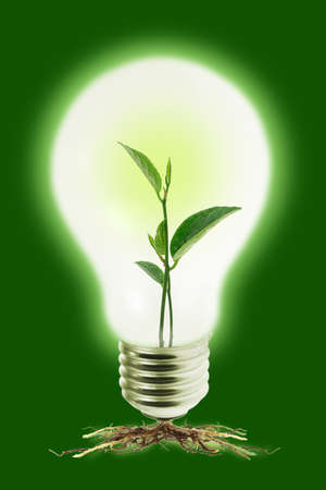 Young green glowing plant in tungsten light bulb  photo