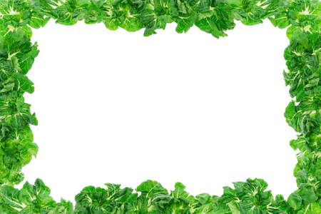 green leaves border: Green vegetable frame background with copy space