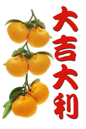 chinese new year card: Chinese new year greetings and mandarin oranges on white background
