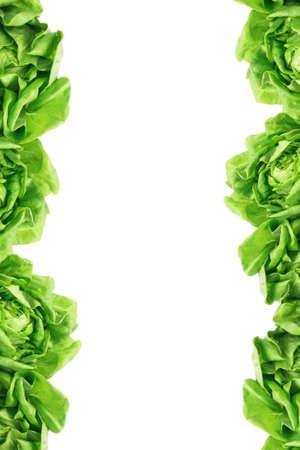 leafy: Green Salad Lettuce Leaves Border on White Background