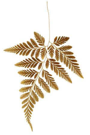 dried leaf: Dry Fern Leaf on White Background Stock Photo