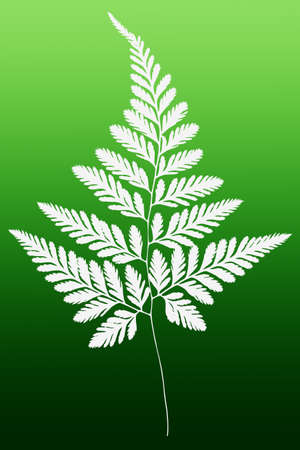 floral objects: White Fern Leaf Silhouette on Green Background Stock Photo