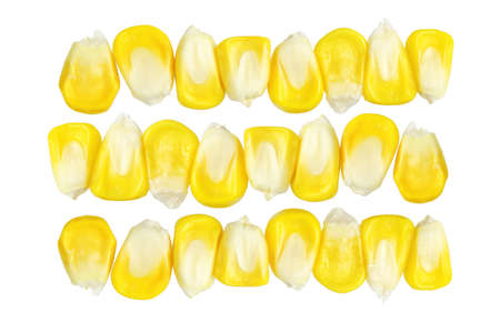 corn rows: Rows of Fresh Sweet Corn Kernels on White Background Stock Photo
