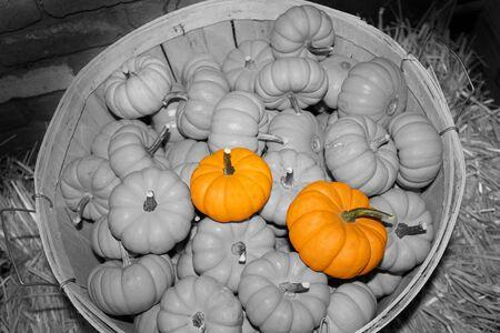 Orange Halloween Pumpkins Stock Photo - 7911322