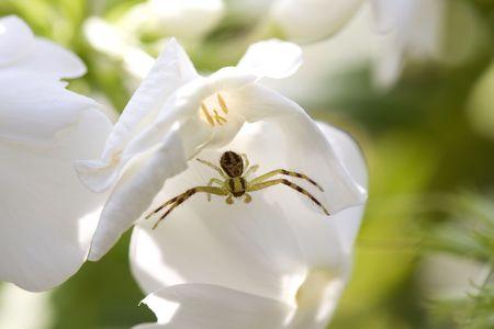Macro of tiny spider