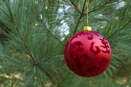 Red Christmas tree ornament in pine tree