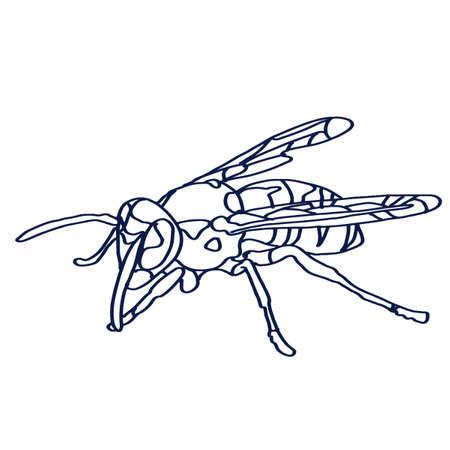 realistické včelí kresby Ilustrace