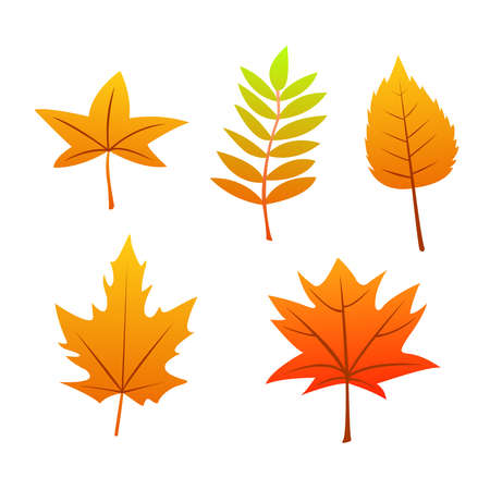 collection beautiful colorful autumn leaves isolated on white background, with modern concept in real leafs.