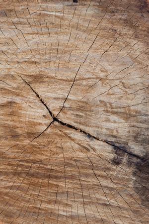 annual ring annual ring: decay wood, annual ring