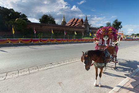 amish buggy: horse carriage at Lumpang province Thailand