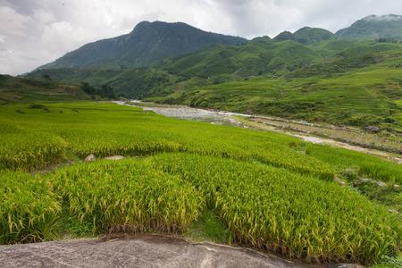 sapa: field step. Sapa, Vietnam Stock Photo
