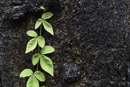 background, climber grow up Stock Photo