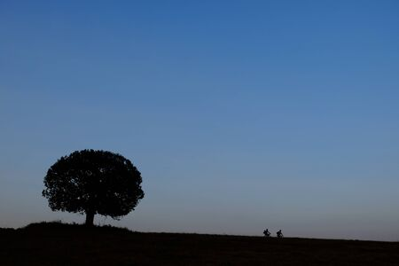 backgruond: Silhouette a bicycle and big tree in grass file