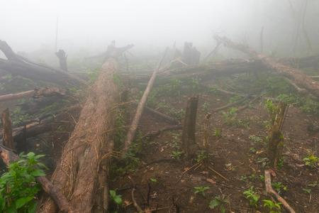 deforestacion: increse deforestación para cultivar, Lao Foto de archivo