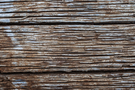decay: decay wood