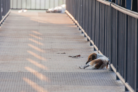 flyover: steel flyover and stray dog Stock Photo