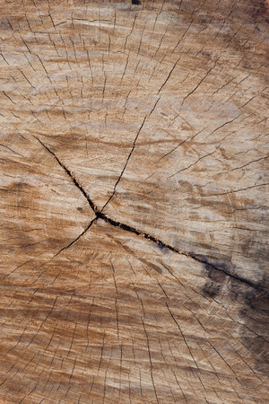 decay: decay wood, annual ring