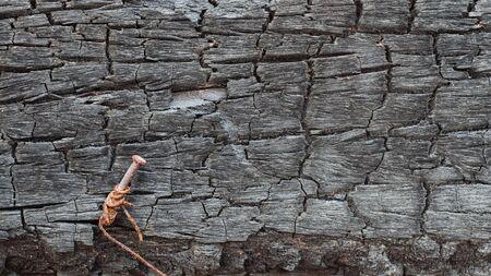 corrosion: wood burn, nail corrosion