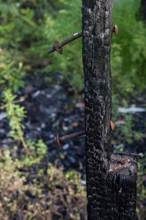 burn: wood burn