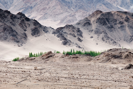 confluence: view point from Thiksey gompa, green tree along Indus river behind hill and desert, Ladakh India