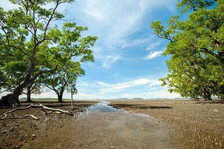 folkways: background of ebb tide and sonneratia caseolaris, also known as mangrove apple or crabapple mangrove , Thailand
