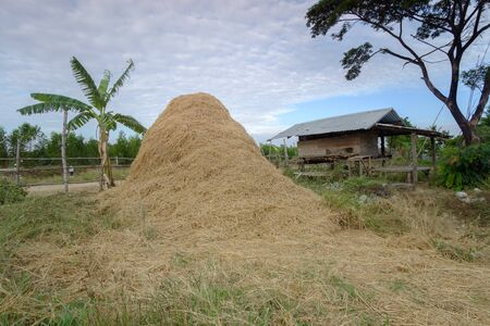chaff: chaff and hut, countryside,  Thailand