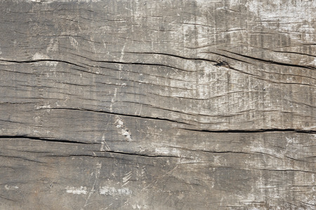 decay wood, background