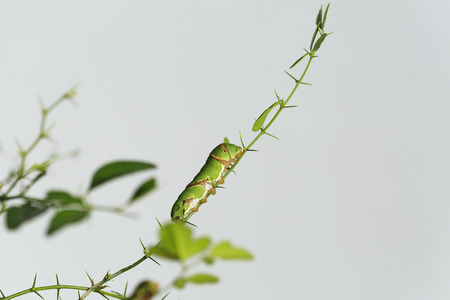 cute of 
