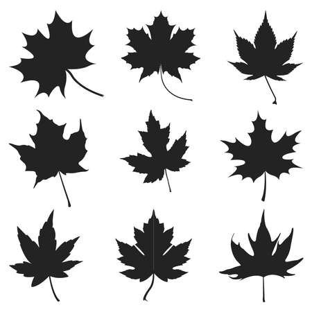 Different style realistick autumn color leaf or Maple brown leaf set