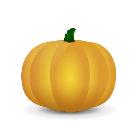 calabaza: Naranja y calabaza amarilla aislada.