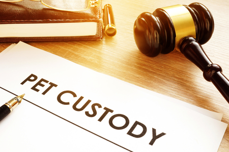 Pet Custody. Documents on a court table. Stock Photo