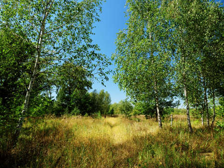 Summer outdoor nature in Europe, grass, trees and blue sky. Imagens