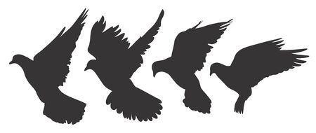 wingspan: Silhouette of the flying pigeon.